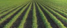 Row Crop.jpg