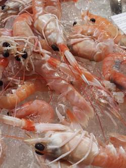 crayfish-697770_1280