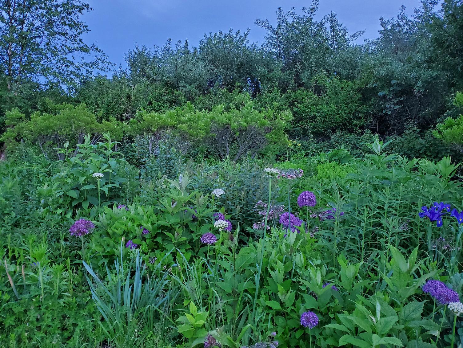 daniel michels architect garden purple.jpg