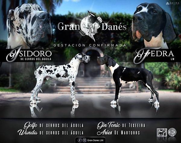 Banner criadero GRAN DANES LM fedra Isid