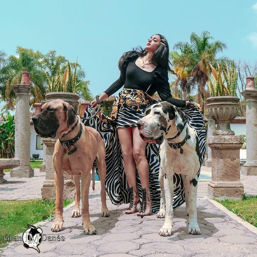 Perros Gran Danes Leonado y arlequin con Liz Macias fashion falda versace en el criadero