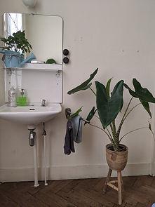 wastafel + plant.jpg
