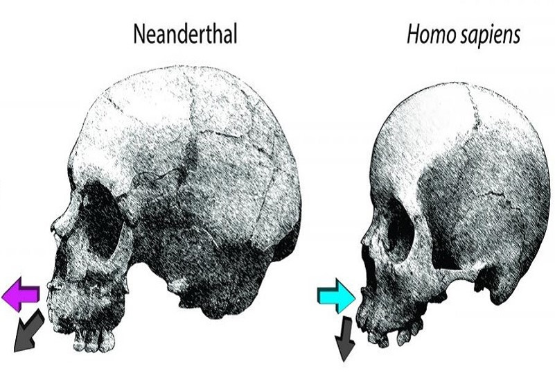 skeletal growth change