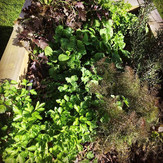 Fruitful Herb Planter