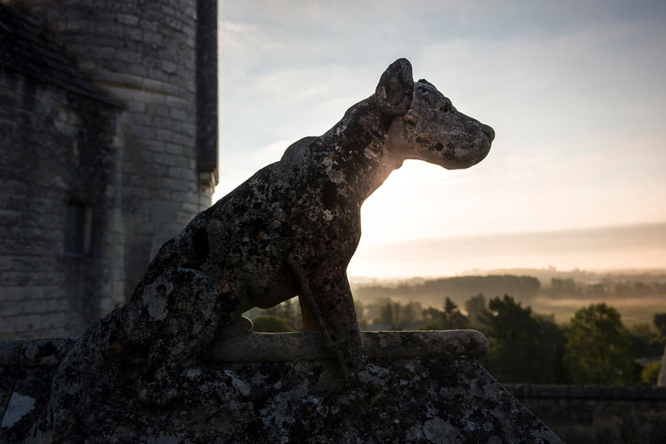 Statue de chien   Cité Royale de Loches