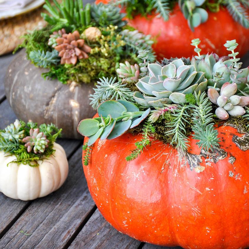 Succulent Pumpkin Workshop (1)