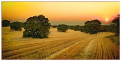 Campos en verano casa rural en toled