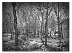 Bosque casa rural en toledo