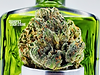 Grandpa's Stash Strane Liberty Cannabis