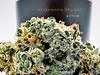 Afternoon Delight Rythm Cannabis