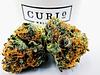 OG Kush Cannabis Curio Wellness