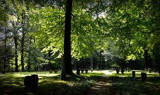 cemetery-grass-graveyard-219714.jpg