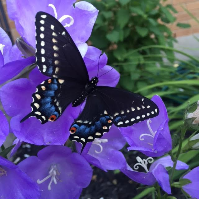 Butterfly Babies Inspiration
