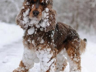 Protect Your Dog from the Cold