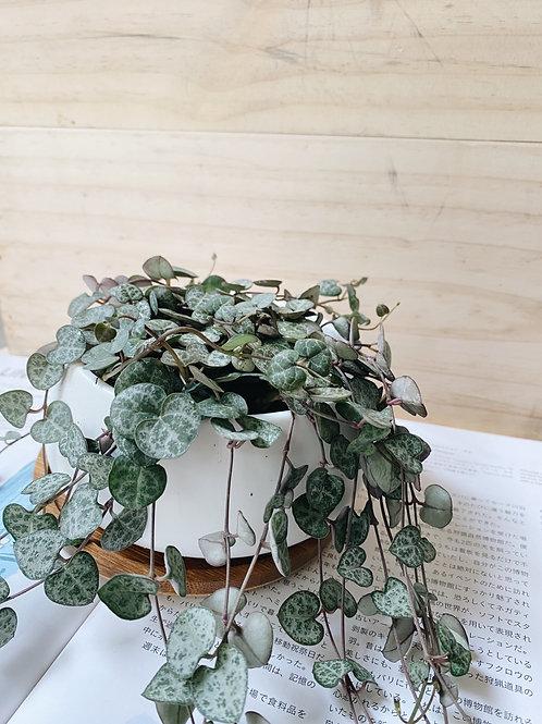 String of Hearts in BILLE Ceramic Pot