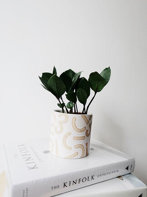 ZZ Plant in CONFETTI Ceramic Pot