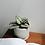 Thumbnail: Tradescantia Zebrina (Wandering Jew) in BETONI Concrete Pot (10cm)