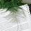 Thumbnail: Asparagus Fern (Asparagus Setaceus) in BETONI Concrete Pot (10cm)