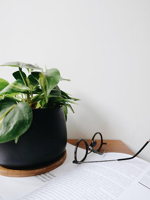 Philodendron Brazil in BILLE Ceramic Pot