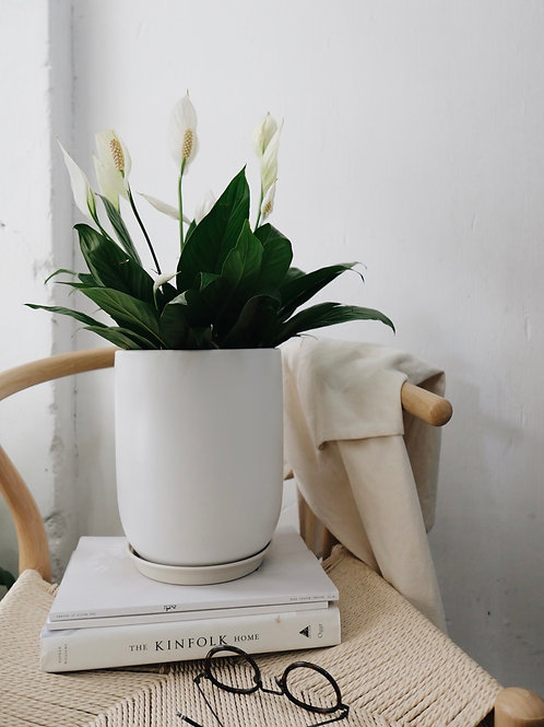 Large Spathiphyllum (Peace Lily) in RILLE Ceramic Pot (19CM)