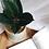 Thumbnail: Ficus Elastica Burgundy