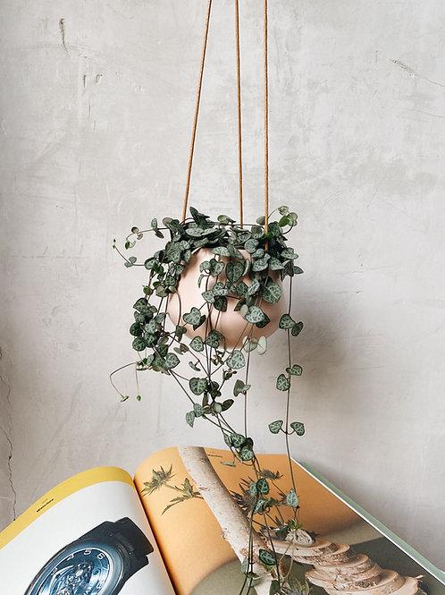 String of Hearts in Murano Ceramic Hanging Pot