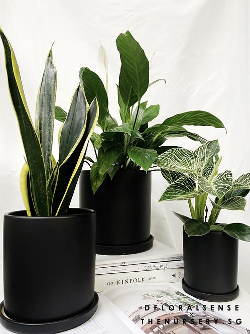 TILLE Ceramic Pot (BLACK)