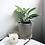 Thumbnail: Monstera Peru (Monstera Karstenianum) in BETONI Concrete Pot (16cm)