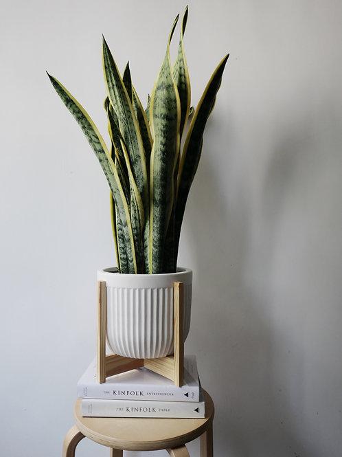 LINJE Ceramic Pot Set