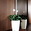 Thumbnail: Peace Lily in Self-Watering Pot
