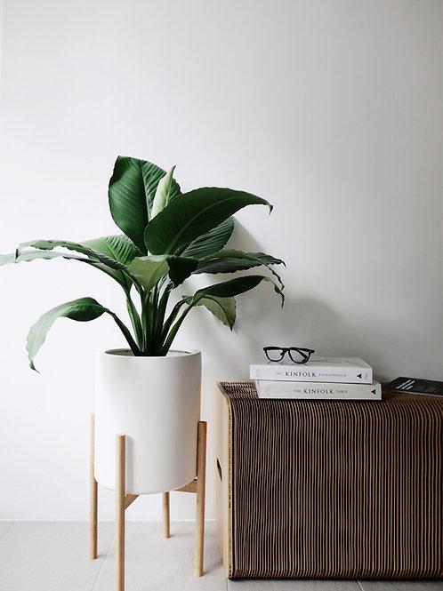 Spathiphyllum Sensation (Peace lily) in STANLLE Ceramic Pot Set