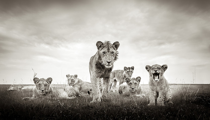 Graeme Purdy, TOGETHER WE STAND', photog