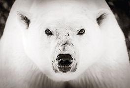 Ice Bear-3509 final facemount190507Woolf