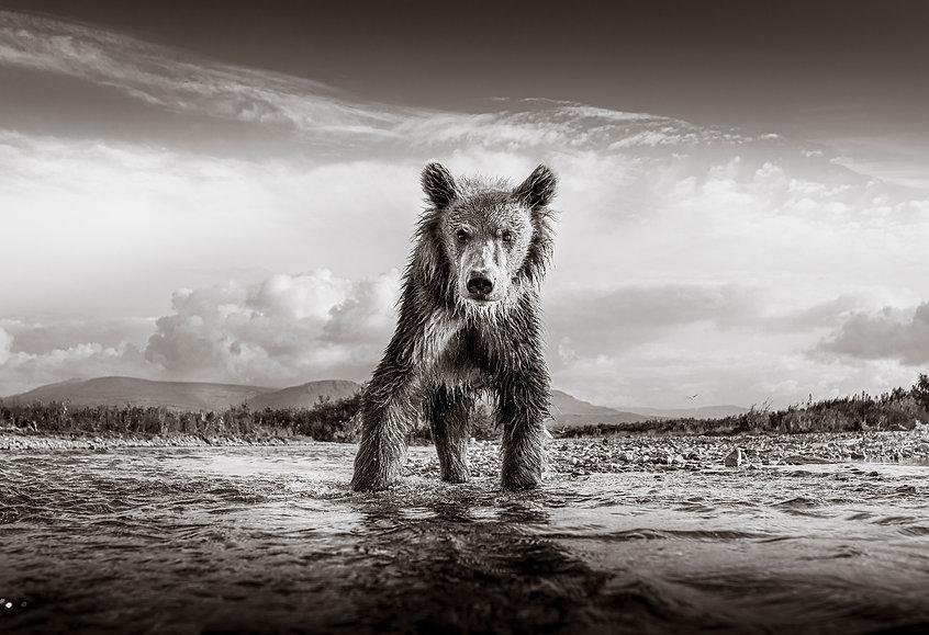 Graeme Purdy_Bear.jpg