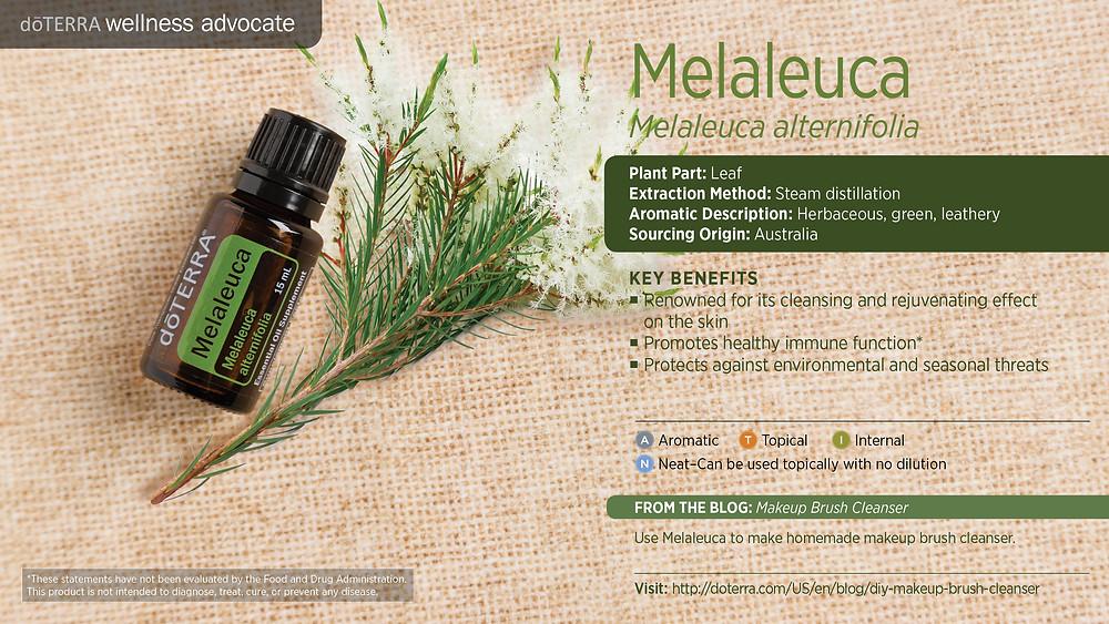 wa-melaleuca (1)