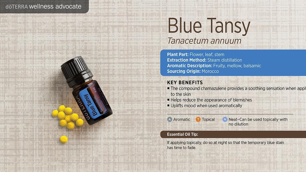 wa-blue-tansy