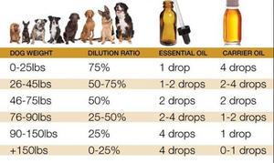 dog dilution