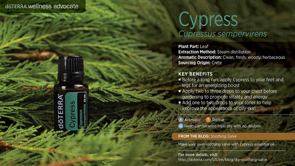 wa-cypress