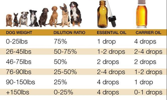 dog dilution