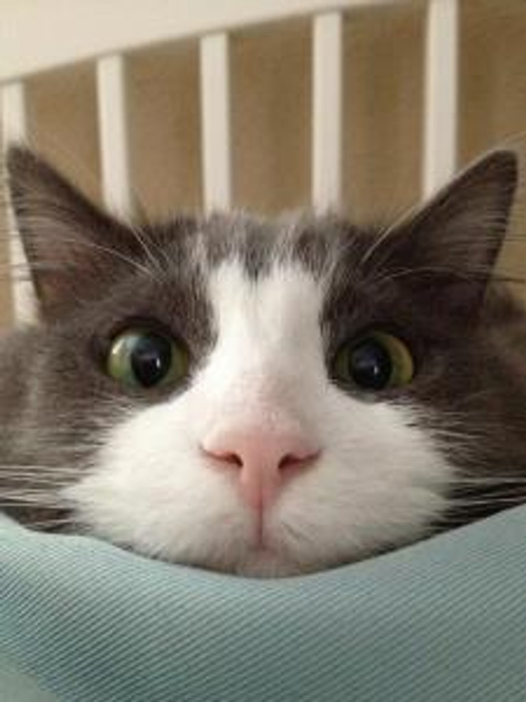 funny-cat-pictures-007-006
