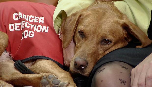 cancer-detecting-dog-620x357.jpg