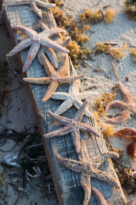 20 Beaches -125 Miles of Pristine Coastline