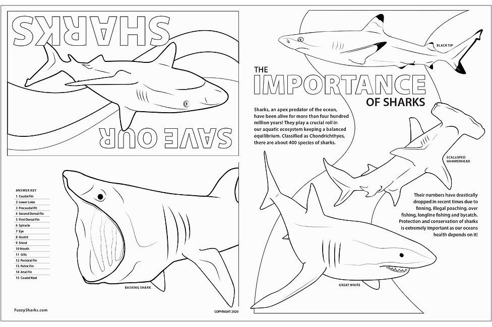 FuzzySharks_Shark_Coloring_Sheet2.jpg