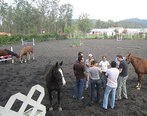 coaching-caballos-hipico-morelia (1).jpg