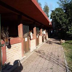 caballerizas-hipico-morelia-caballos-3.j