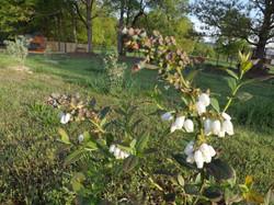 Plants in bloom