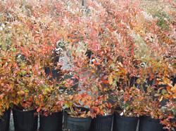 Plants in Fall
