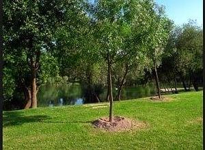 tree plant 1.jpg