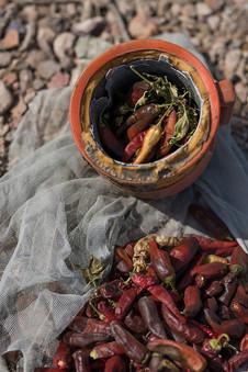 Récolte de piments à Assassan, une terre aride dans la région d'Obock.