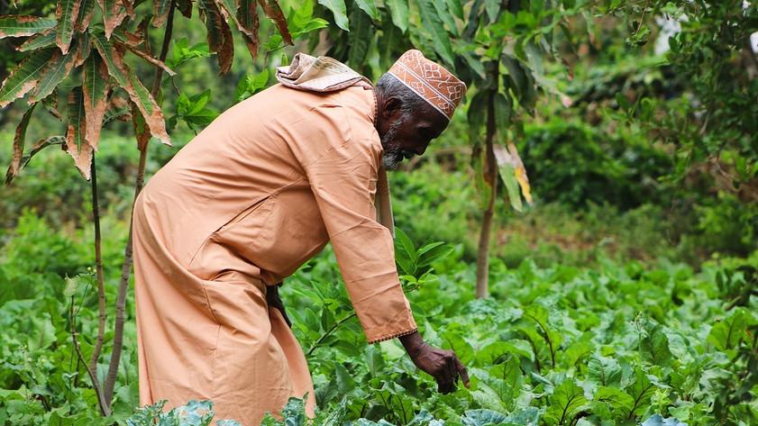 Le propriétaire de la ferme inspecte son jardin à Randa.